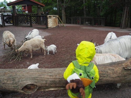 Ein bisschen Regen kann uns nichts anhaben: der Streichelzoo im Slottkogan